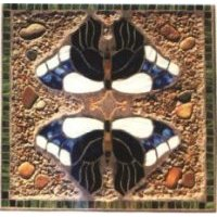 Butterfly Reflections